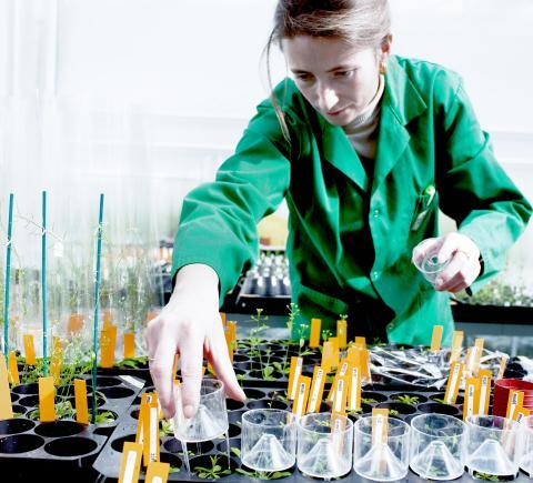 arasystem for arabidopsis thaliana